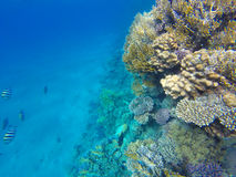 Red Sea fishes on a coral reef. Underwater stock images