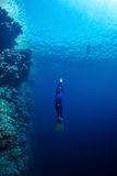 The Red Sea. Free diver ascending along the coral reef wall in the tropical sea Royalty Free Stock Photos