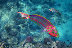 Red sea junker side Royalty Free Stock Images