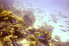 Red Sea marine life. Abundant schools of fish glide around the diver in the Red Sea, Hurghada, Egypt Stock Photos