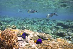 Red Sea marine life. Reefs around Giftun Islands in the Red Sea, Hurghada coast, Egypt Stock Photos