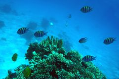 Red Sea realm. Reefs of the Red Sea and marine life, Urghada coast, Egypt Royalty Free Stock Photo