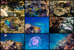 Red Sea reef life. Collage of underwater pictures in Sharm el Sheikh, Red Sea, Egypt Stock Image