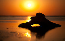 Red sea sanrise. Beautiful Red sea sunrise during  low tide time Royalty Free Stock Photography