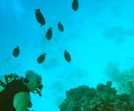 Red Sea scuba diving Royalty Free Stock Photo