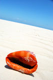 Red sea shell talking  Stock Photo