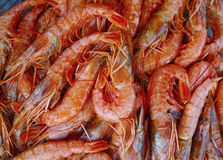 Red sea shrimps background Royalty Free Stock Images