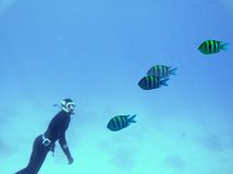 Red Sea skin diving Stock Images
