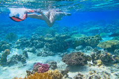 Red Sea snorkeling Stock Photos