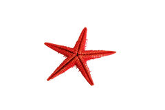 Red sea star Stock Image
