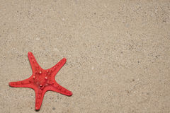 Red sea star. On the white sand beach royalty free stock photos