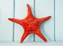 Red sea star Royalty Free Stock Images