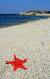 Red sea star on beach Stock Image