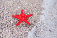 A red sea star Royalty Free Stock Photos