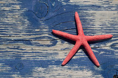Red sea star on beach bench Royalty Free Stock Photo