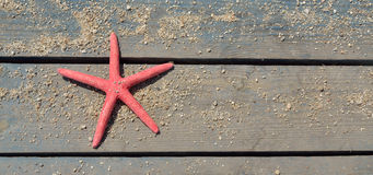 Red sea star on beach bench Stock Images