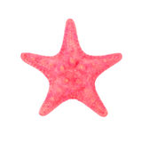 Red sea star isolated on white background Stock Images