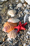 Red Sea star, sea shells, stone beach, clean water background Royalty Free Stock Images