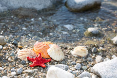Red Sea star, sea shells, stone beach, clean water Royalty Free Stock Images