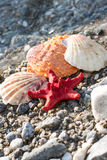 Red Sea star, sea shells, stone beach, clean water Stock Photo