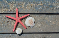 Red sea star, shell and stone Royalty Free Stock Images