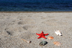 Red sea star and shells on beach Royalty Free Stock Image