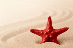 Red sea star or starfish in the sand. Pattern of lines in background stock photography