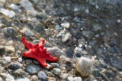 Red Sea star, stone beach, clean water background Stock Photo
