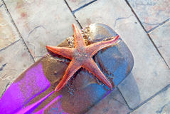 Red sea star. On a violet paddle Royalty Free Stock Photo