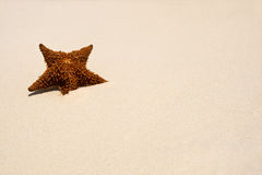 Red Sea star on the white sand Royalty Free Stock Photos