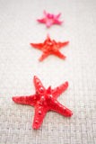 Red sea stars Stock Photography