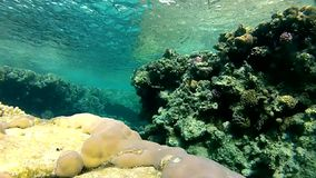 Red sea. Under water. The corals and fish. stock video footage