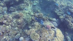 Red sea. under water fish life stock footage