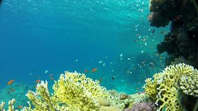 Red sea. Under water. Snorkeling in the Red sea Underwater life fish on the bottom. The corals and the caves. Corals. Fish and clear water. Tropical sea stock video footage