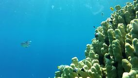 Red sea. Under water. stock footage