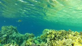 Red sea. Under water. Underwater life fish on the bottom. The corals and the caves. Corals. Fish and clear water. Tropical sea stock video footage