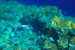 Red sea underwater Stock Photos