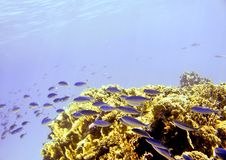 Red Sea underwater. Diving and exploring the reefs around Giftun Islands, Hurghada, Egypt Royalty Free Stock Photography
