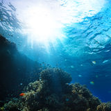 Red sea underwater coral reef. With fishes and sunrays at the surface royalty free stock photo