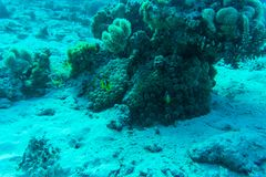 Red sea underwater coral reef with fishes. And sunrays at the surface Royalty Free Stock Image