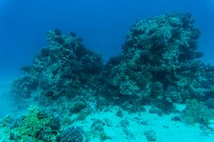 Red sea underwater coral reef with fishes. And sunrays at the surface Royalty Free Stock Photos