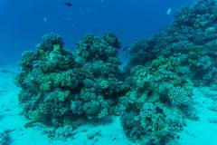 Red sea underwater coral reef with fishes. And sunrays at the surface Royalty Free Stock Photo