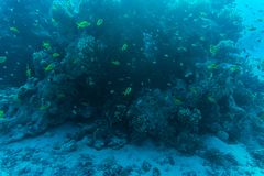 Red sea underwater coral reef with fishes. And sunrays at the surface Stock Photo