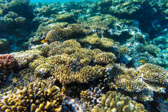Red sea underwater coral reef Stock Photos