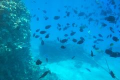 Red Sea underwater scenery with tropical fishes stock images