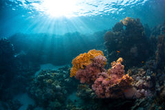 Red Sea underwater Royalty Free Stock Images