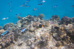 Red Sea underwater with tropical fishes Stock Photo