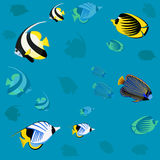 Red sea wild fish. Ocean Pattern Stock Image