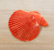 Red seashell Stock Image