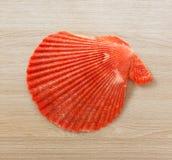 Red seashell Stock Image